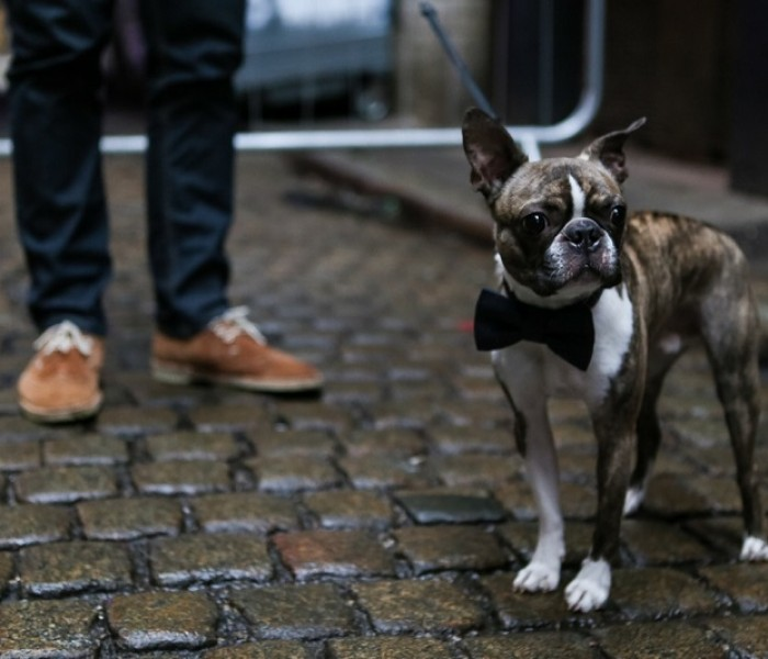 Hipster Dog Show At Kosmonaut Georgie Glass Launches Her New Book: Pub Dogs Of Manchester