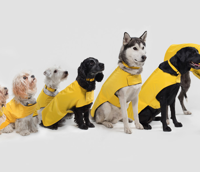PetsPyjamas Launch Their First Own Pawditch Collection