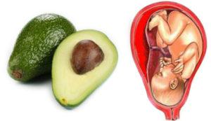 avocado womb