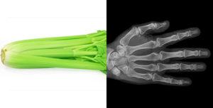 celery-and-bones
