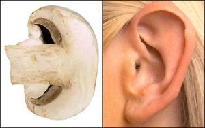 mushroom ear