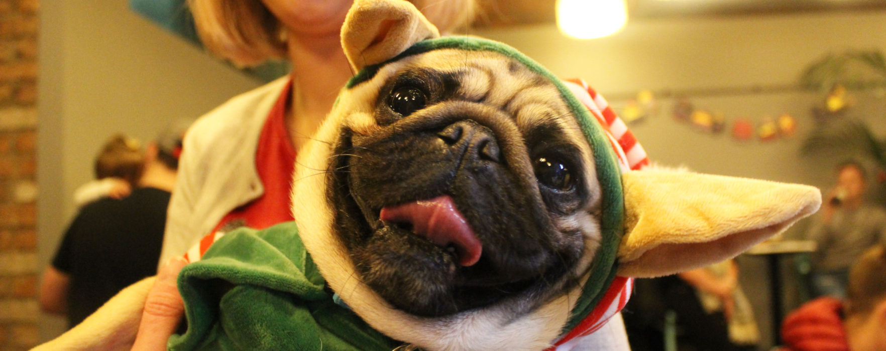 A Pugging Great Time At Manchester's First Pug Cafe!