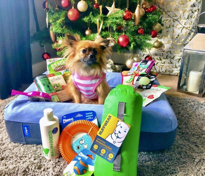 VIVA Dog Review: Gigi tests out the best pooch presents on the market