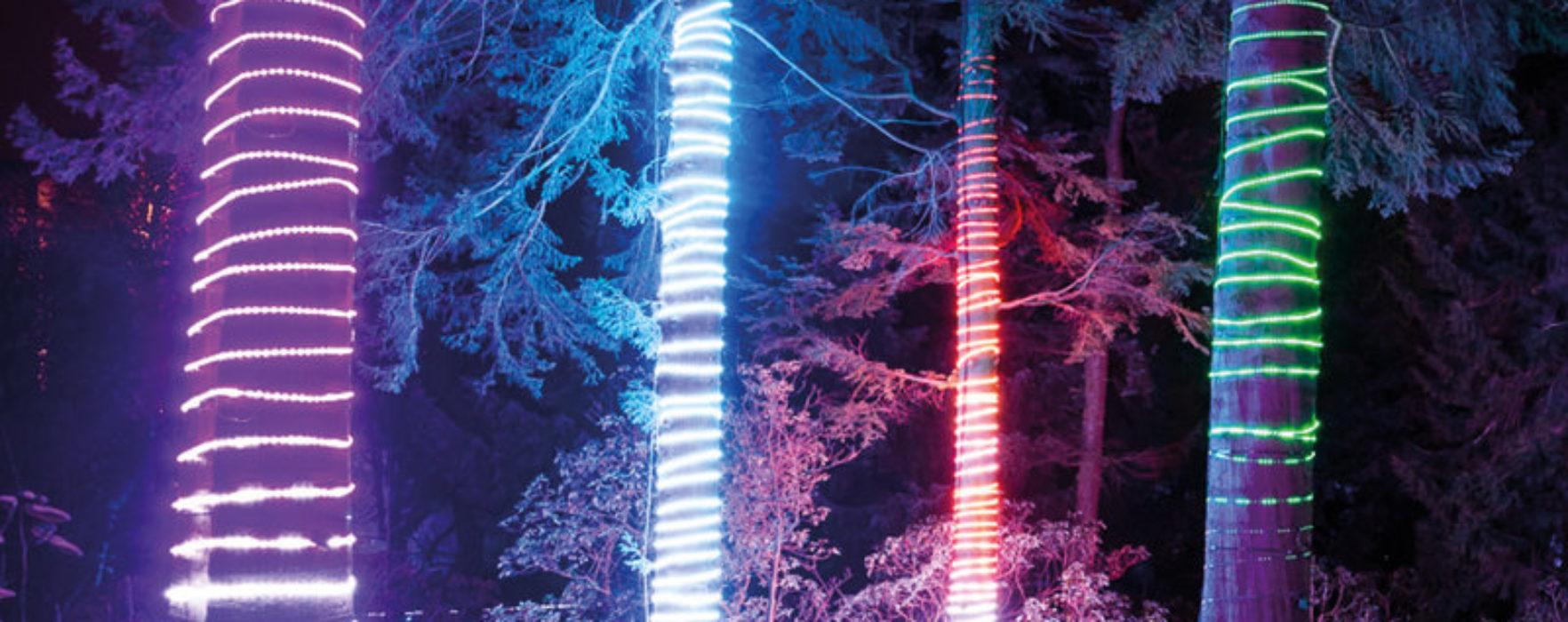 Christmas at Dunham Massey – The magical after-dark illuminated trail