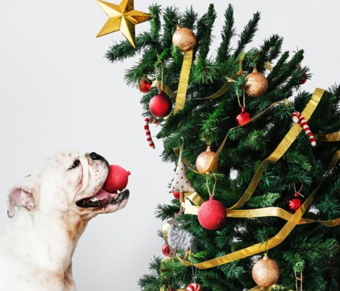 WHAT'S ON: Santa Paws is coming to town
