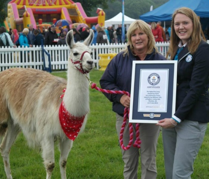 Caspa the llama sets a new Guinness World Record at DogFest