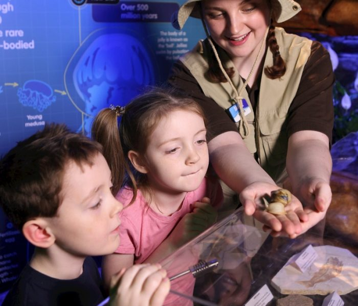 Take A Magical Journey This Easter With The Snail And The Whale At Sea Life Manchester  And You Can Touch The Snails Too!