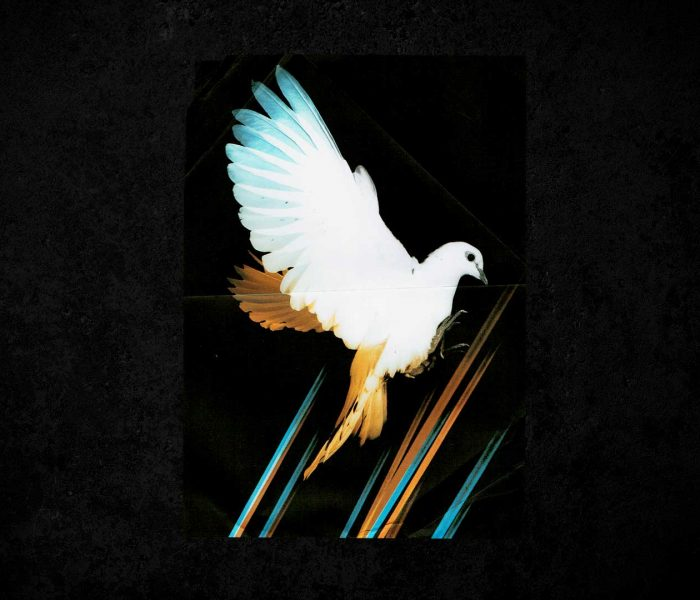 VIVA's Top 10 Must See Warehouse Project Shows