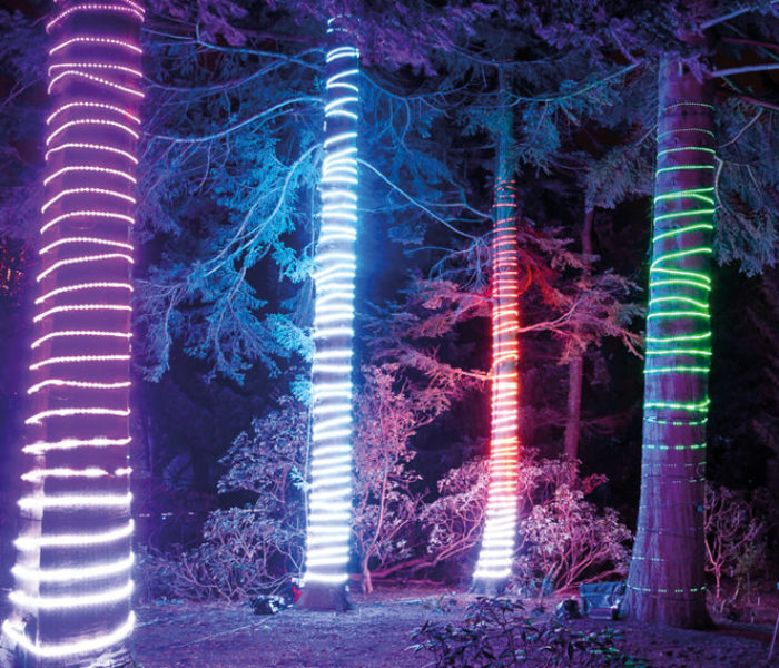 Christmas at Dunham Massey – The magical after-dark illuminated trail