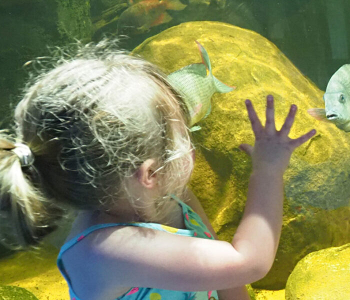 Whipsnade Zoo opens the UK's first endangered freshwater fish Aquarium