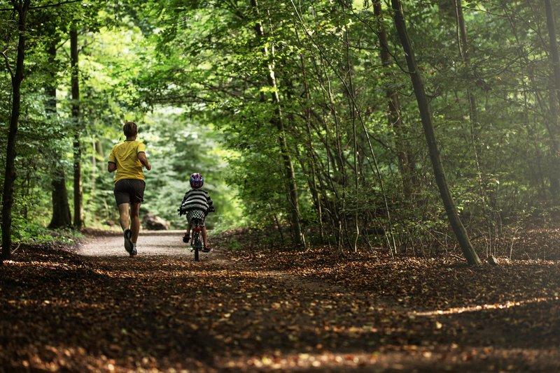 Forest Pathway near Aarhus Denmark