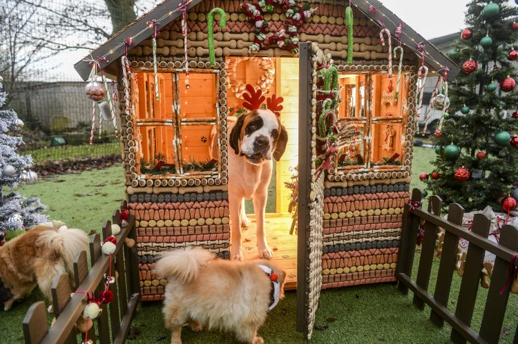A winter wonderland grotto was set up for dogs in Cheshire